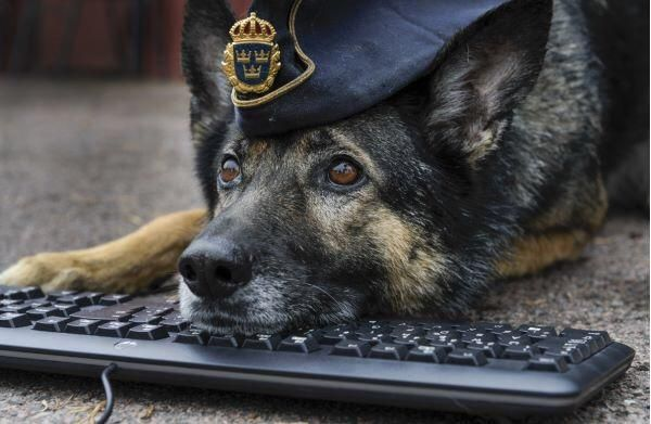 This picture on the Swedish polices 404-page#dogs #kitty #lovecats #kittens #animals #ねこ #animal #kitten #cat #pets #ilovemycat #love #catoftheday #happynewyear #adorable #catlover #pet #meow #猫 #cute #pinterest #policelove
