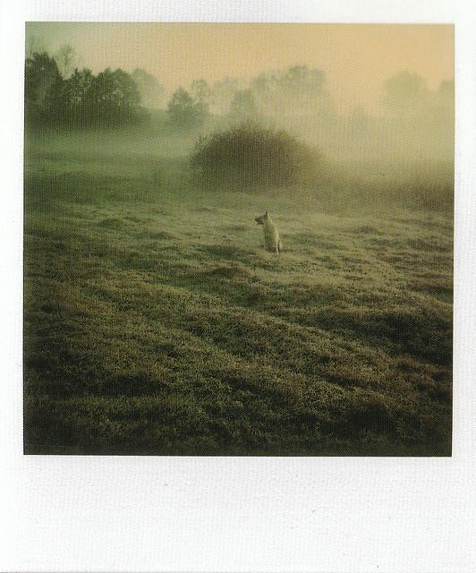 Myasnoye, 1980_I    Instant Light: Tarkovsky Polaroids    Edited by Giovanni Chiaramonte & Andrei Tarkovsky  Introduction by Tonino Guerra    Thames & Hudson  2004  ISBN: 0 500 28614 0    www.worldcat.org/oclc/62796344