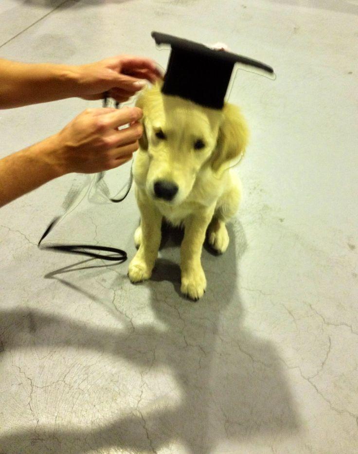 Abby graduates from puppy school!