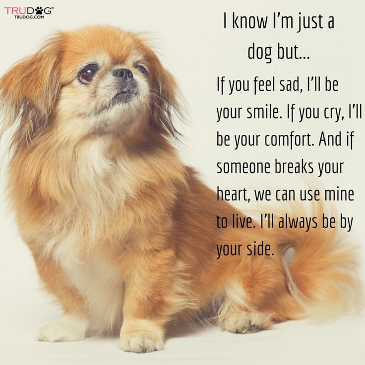 Looks like Buster, my first dog, who was only half Pekingese. http://www.theimagearchitect.com