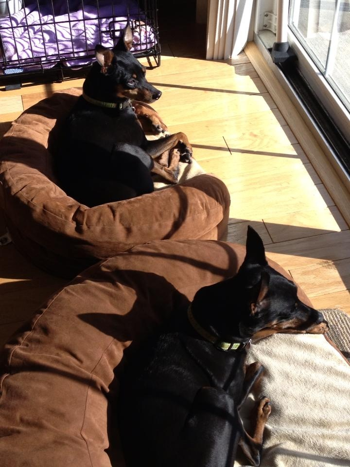Min pins in the sun :) The King of Toys, roughing it. :)
