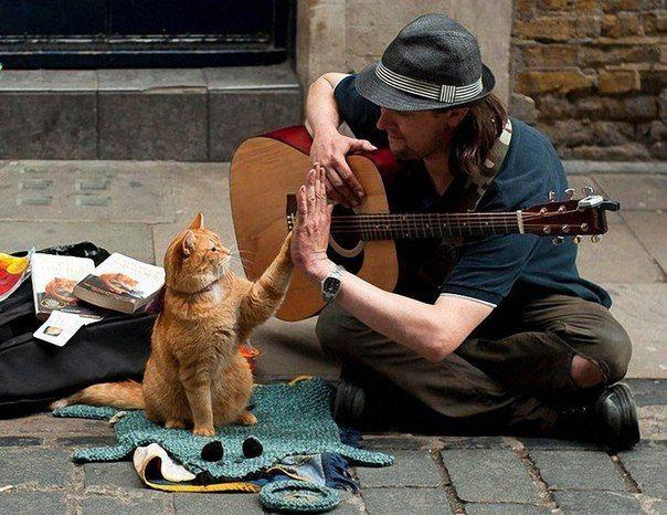 Я вас обожаю, КОШКИ мои Je vous adore, mes chats I adore you, my pussycats Ich vergöttere Sie, des Kätzchens meine Le adoro, el minino mis Adoro Lei, i miei mici Σε λατρεύω, μου γατάκια 私は、あなたを敬慕します、私のかわいこちゃん、 Olet rakas, kisut ovat | Jolly Cool