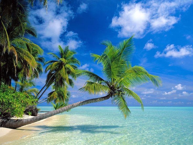 Bending Palms