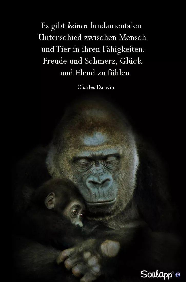 Es gibt keinen fundamentalen Unterschied zwischen Mensch und Tier