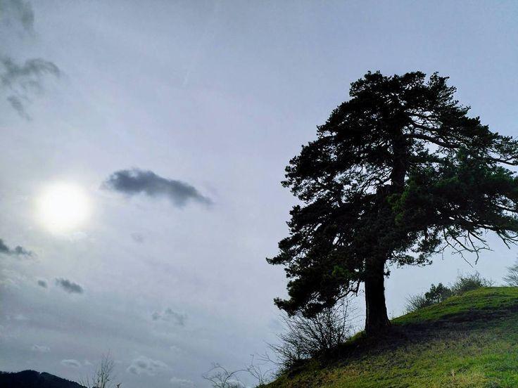 Denkerbaum. Kein Geräusch keine Seele stört hier den frei fliegenden Geist.  #Naturmomente #Schwarzbubenland #Solothurn #Nunningen #Schweiz  #photooftheday #magicplaces #kraftorte #switzerland #switzerlandpictures #magicswitzerland  #nature #naturelovers #green #forest #fall #autumn #sky #mountains
