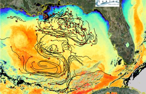 Oil Spill Gulf of Mexico 2010 | Smithsonian Ocean Portal