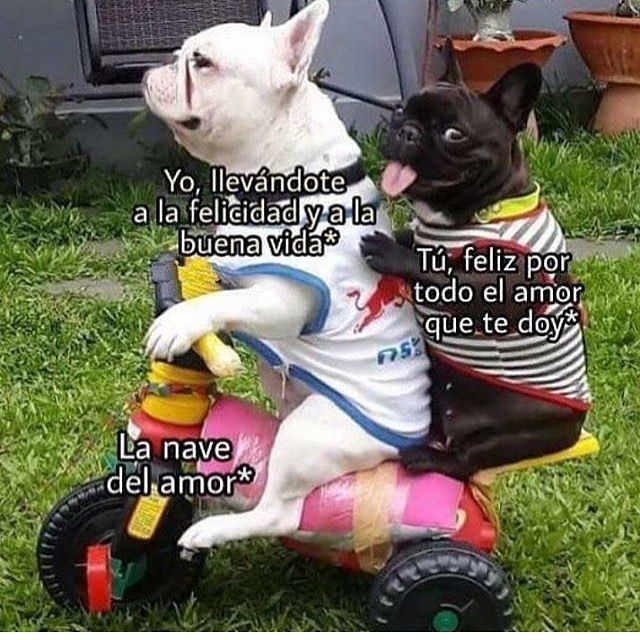 Memesespanol Memasos Amor Perros Memes Perros Memes Divertidos Meme Divertido