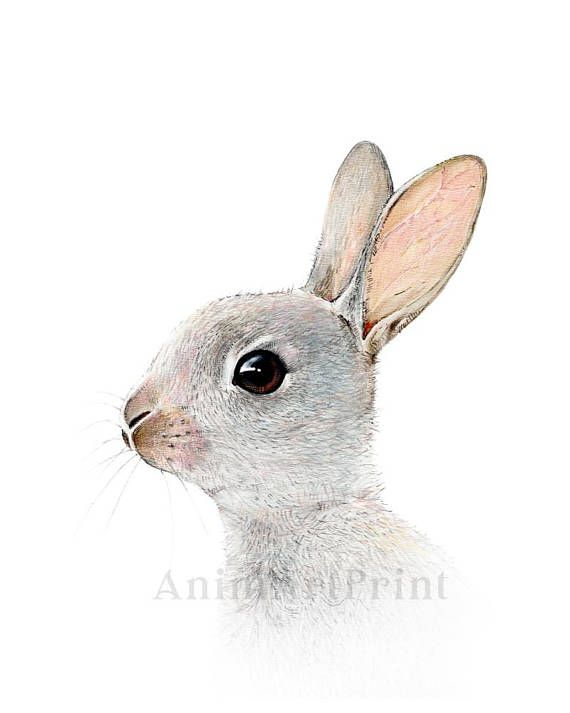 Mignon Lapin Impression Neutre Pepiniere Decor Woodland Bebe