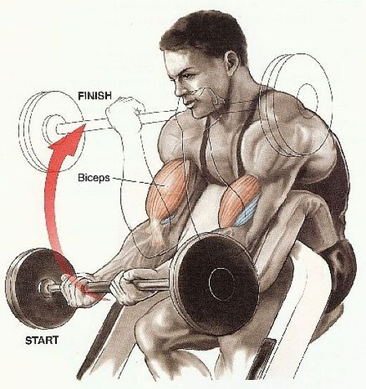 Great Bicep Workout