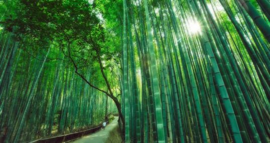 Lessons from the Chinese Bamboo Tree