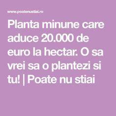 Planta minune care aduce 20.000 de euro la hectar. O sa vrei sa o plantezi si tu!   Poate nu stiai