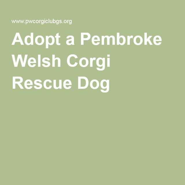 Adopt a Pembroke Welsh Corgi Rescue Dog