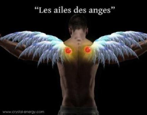 Ces chakras sont nommés Ailes des anges,  car lorsqu'ils sont activés ils agissent comme des ailes nous permettant de nous déplacer entre les différentes sphères allant de la conscience à la volonté.