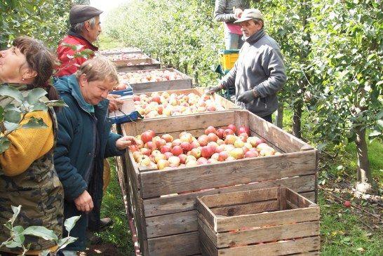 Jak rozwiązać problem z zatrudnianiem pracowników w sadzie?