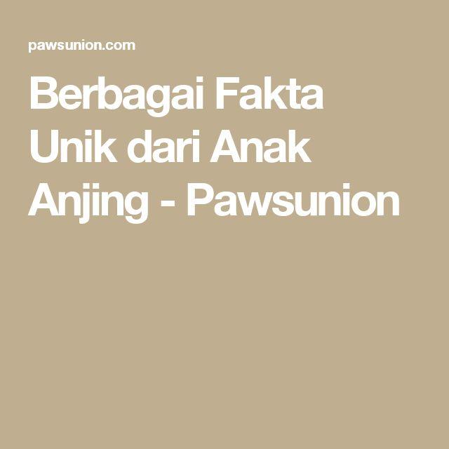 Berbagai Fakta Unik dari Anak Anjing - Pawsunion