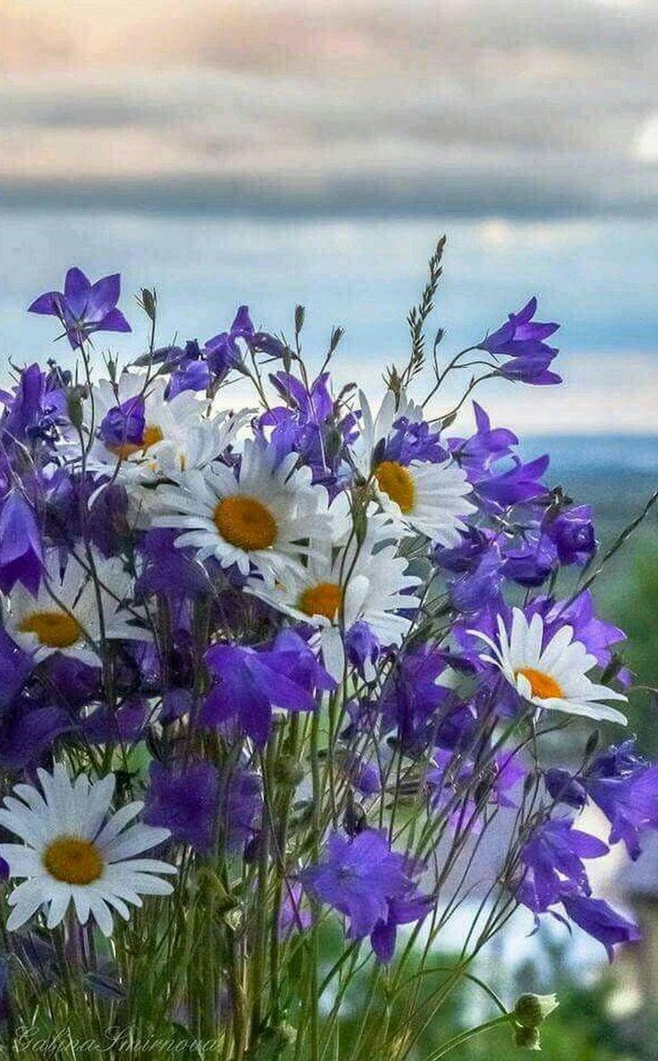 потолки выцветают, красивые открытки с полевыми цветами коллекция имеет