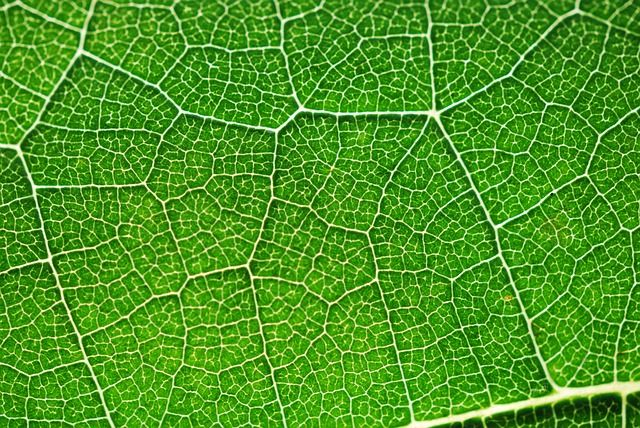 Photosynthesis Definition, Equation, Process & Cellular