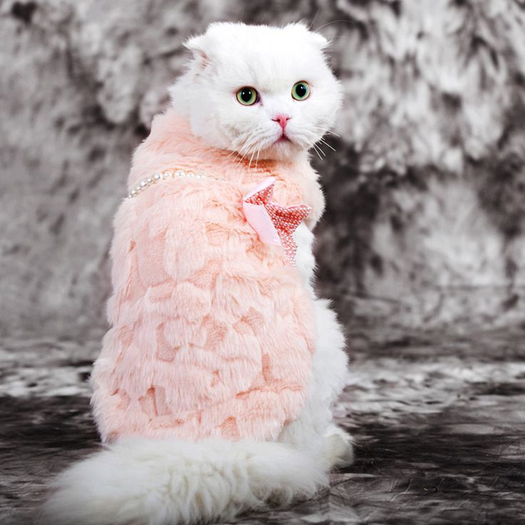HOOPET pet clothes elegant Luxury  pearl  fur Winter overcoat samll dog cat clothes bowknot Chihuahua // FREE Shipping //     Get it here ---> https://thepetscastle.com/hoopet-pet-clothes-elegant-luxury-pearl-fur-winter-overcoat-samll-dog-cat-clothes-bowknot-chihuahua/    #catoftheday #kittens #ilovemycat #lovedogs #pup