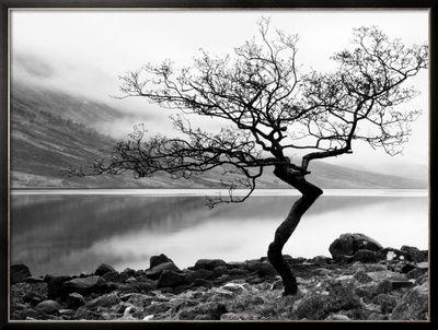 Eenzame boom aan oever van Loch Etive in Schotland Fotoprint van Nadia Isakova bij AllPosters.nl