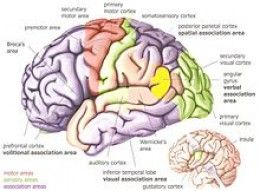 What is Aphasia, Symptoms, Causes, and Treatments. Repinned by SOS Inc. Resources pinterest.com/sostherapy/.