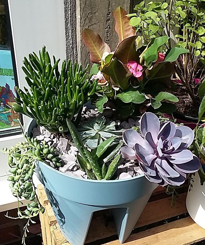 1276 best mehrj hrige pflanzen images on pinterest for Pflanzen drinnen