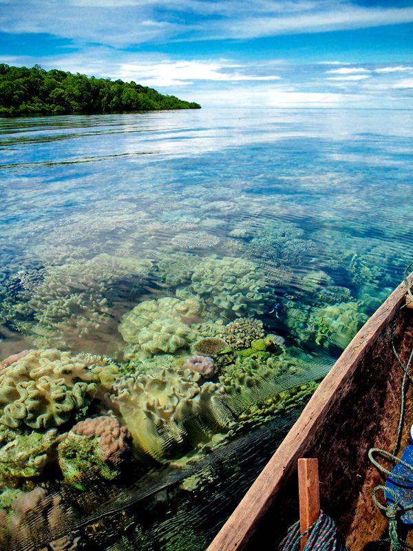 Karang lunak yang melambai-lambai di sisi Pulau Tete.