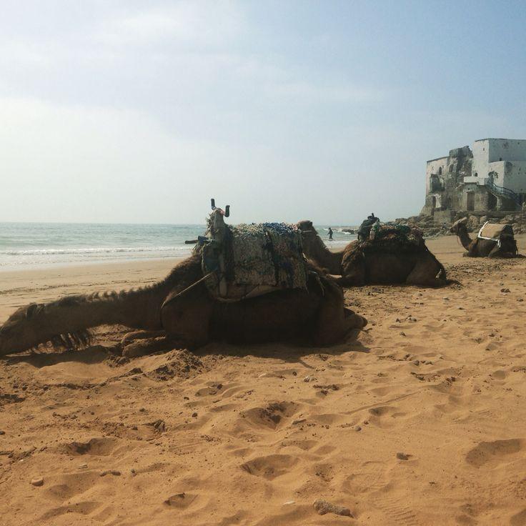 Une bonne sieste sur le sable.... I love Sidi Kauki!