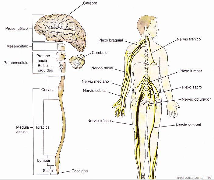 Mejores 32 imágenes de Salud mental en Pinterest | Cuerpo humano ...
