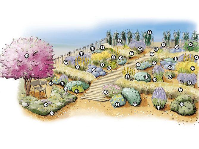 17 meilleures id es propos de plantes m diterran ennes sur pinterest maisons - Petit jardin graines et plantes le havre ...