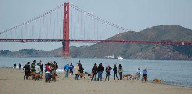 Greatest Dog City – San Francisco