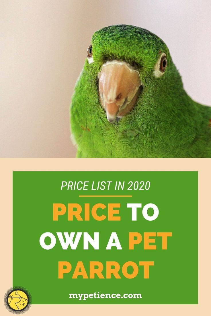 How Much Is A Parrot To Cost In 2020 In 2020 Parrot Parrot Pet Conure Parrots