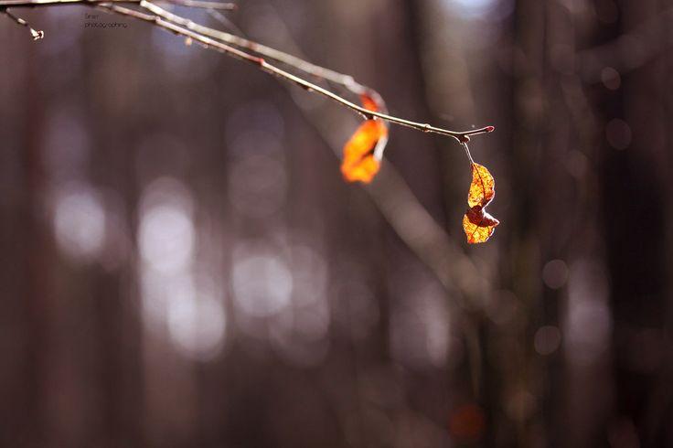 Winter survivors | by Siniirr