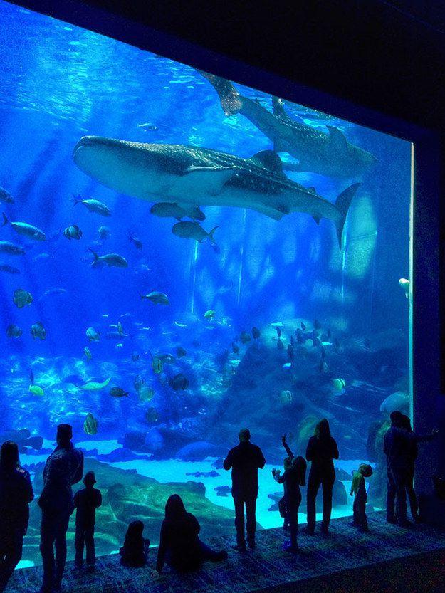 Larger than life size | 10 Crazy And Outrageous Aquariums