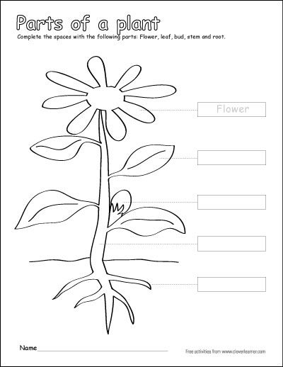 Label and color the parts of a plant. A free printable