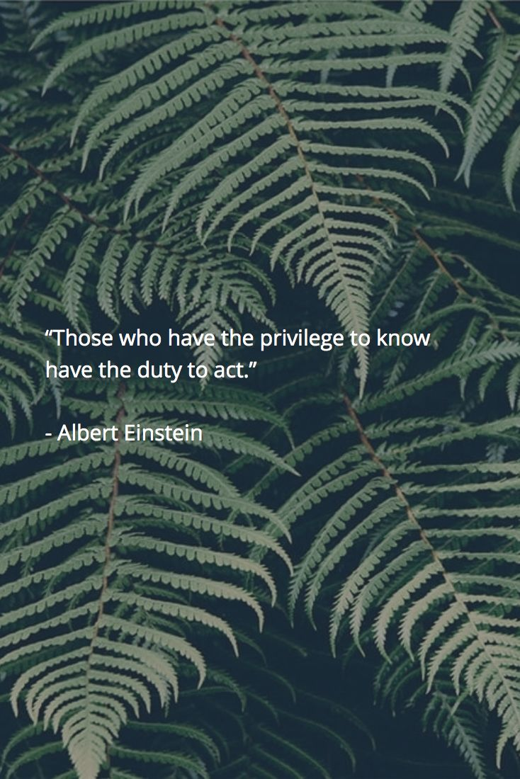 "✪ ""Those who have the privilege to know have the duty to act."" ~Albert Einstein…"