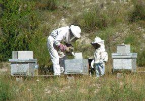 apiculteurs: Bees Varia, Bijenstal En, Bijenkast, Non Inten Agriculture, Bijenst En,  Bees Houses, Lavender Honey, Agriculture Area, Flowers Honey
