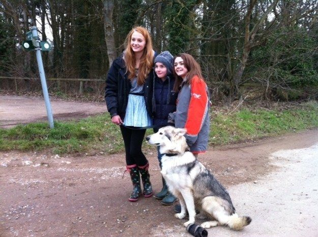Sophie Turner, who plays Sansa Stark, adopted the dog that played her dire wolf in the show. The dog is named Zunni.