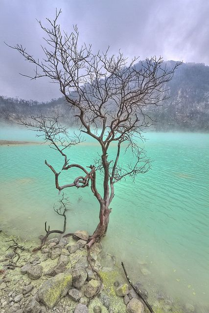 """kawah putih by Venerdi Pictures, via Flickr. """"Kawah Putih (or 'white crater') is a remarkable lake and tourist spot in a volcanic crater about 50 km south of Bandung in West Java in Indonesia."""""""