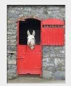 Ned the Donkey from Knock at Tullyboy Farm  www.tullyboyfarm.com