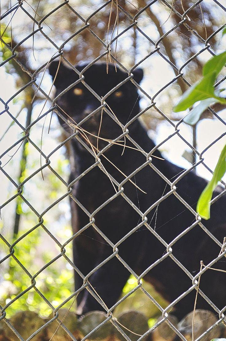 #Parque #Zoológico Buin Zoo