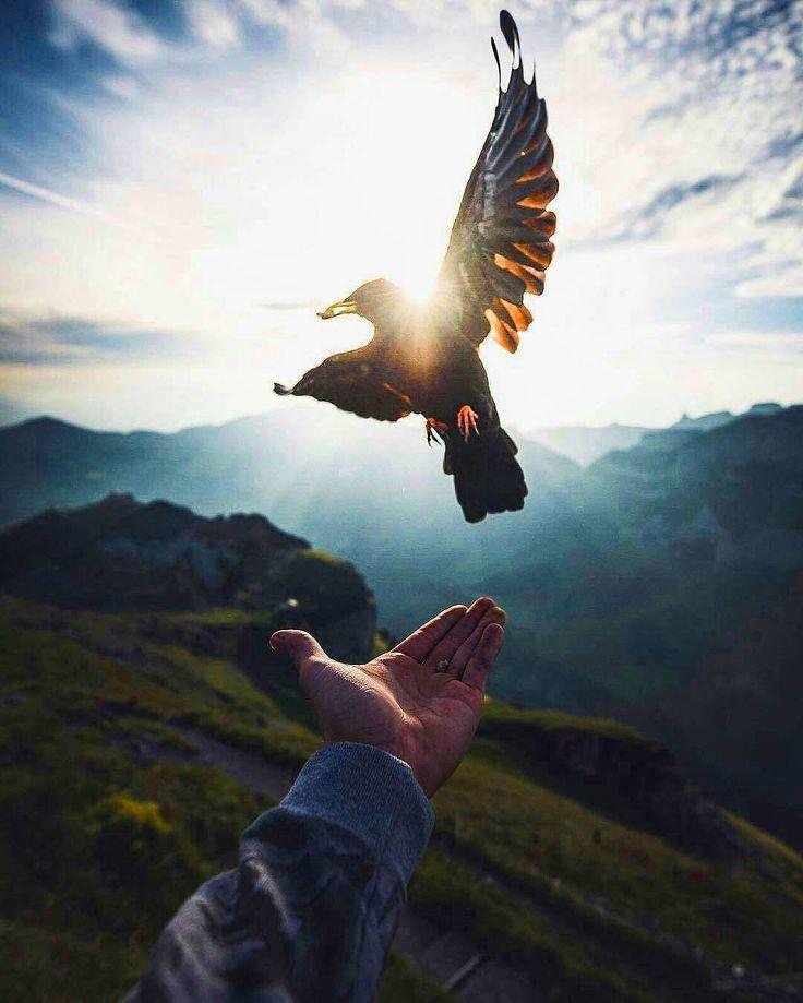 Sempre admirei o por quê dos pássaros permanecerem  no mesmo lugar se eles podem voar para qualquer canto da terra. Então eu me fiz a mesma pergunta.  Harun Yahya  Foto: pássaro da montanha em Schäfler Suíça por @nxplore