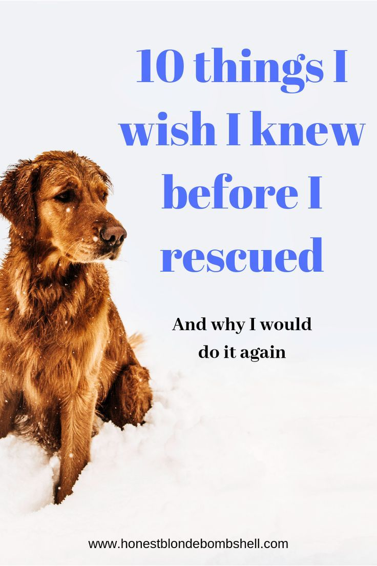 Want To Adopt A Rescue Dog Read These 10 Tips First Rescue Dogs Rescue Dogs Tips Rescue Dog Quot Shelter Dogs Adoption Shelter Dog Quotes Rescue Dog Quotes