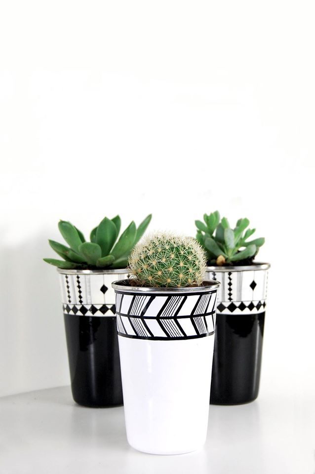 ✿*Cactus*✿*Suculentas*✿                                                                                                                                                                                 Más