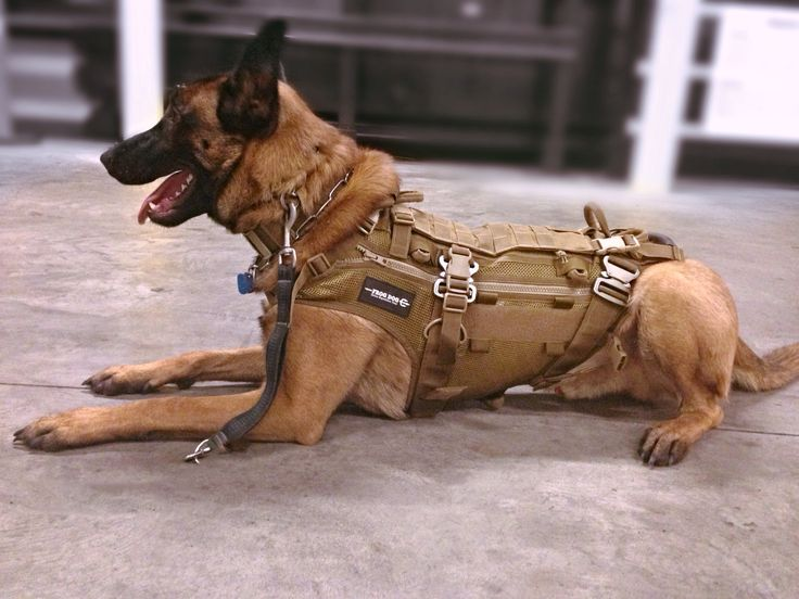 Frog Dog Modular Patrol Vest By Sirius Expedition Gear