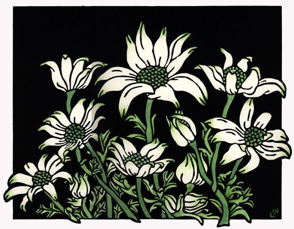 Flannel Flowers Design - Limited Edition Handpainted Linocuts by Lynette Weir