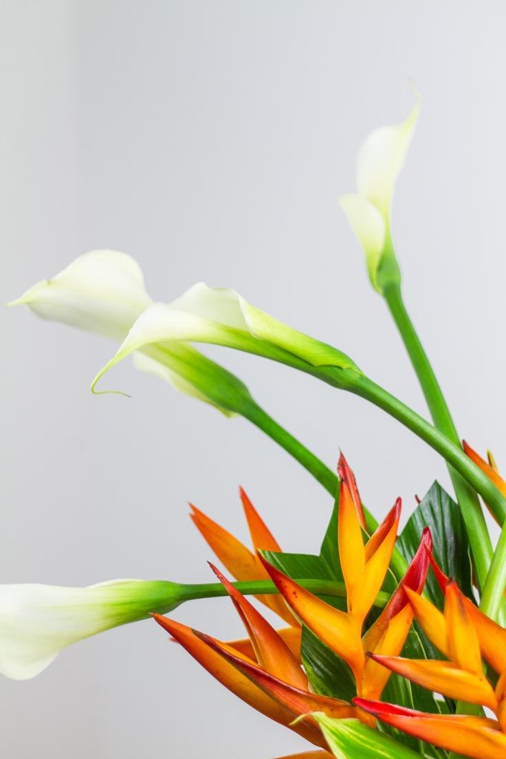 ROMERO flora