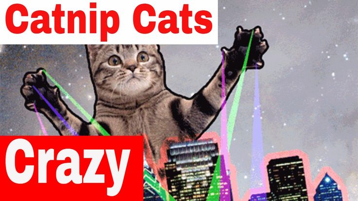 Cats and Catnip: - How Does It Work? Home made Music To Video