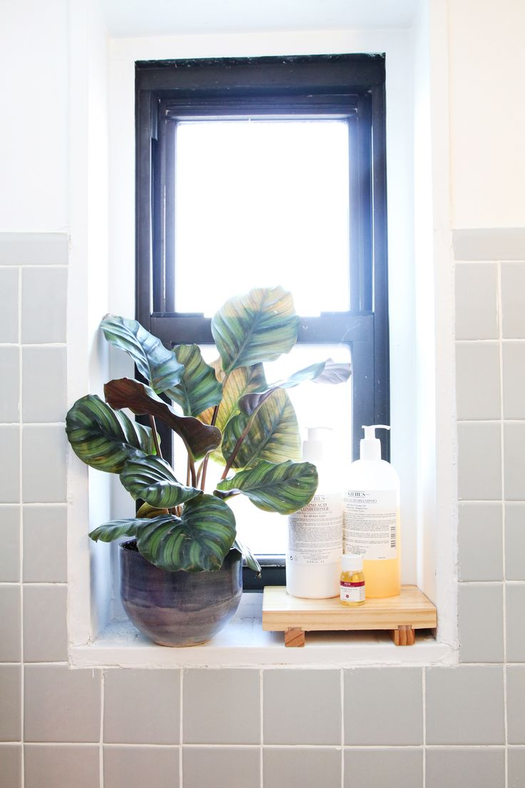 A hearty plant like a ficus can withstand the hot and cold temperatures of bathrooms. Plus, it'll get watered with each shower! Since the windowsill isn't truly waterproof, we set our jumbo-sized bottles of shampoo and conditioner on a bamboo sushi geta that'll resist water.