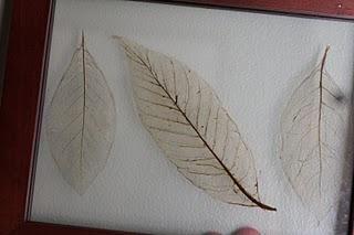 Como hacer hojas de arbol trasparentes (esqueletos de hojas) : VCTRY's BLOG