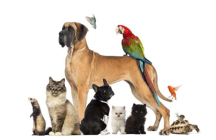 http://www.forumcani.com/wp-content/uploads/2014/09/bigstock-Group-of-pets-Dog-cat-bird-44783536-1024x663.jpg L'UnioneSarda.it » Cronaca » Cani di razza sfilano in passerella ... - L'Unione Sarda - http://www.forumcani.com/blog/2015/06/03/lunionesarda-it-cronaca-cani-di-razza-sfilano-in-passerella-lunione-sarda/ Pet Community and Social Network